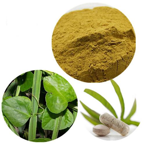 cissus quadrangulari herbal powder