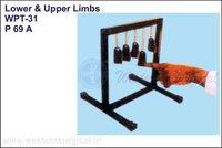 Lower & Upper Limbs