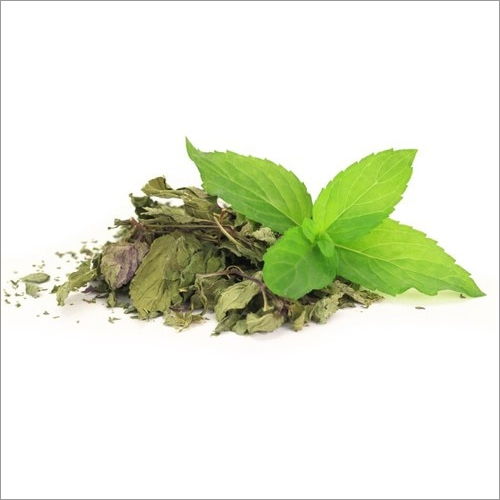 Mentha Piperita Herb Dried Leaves