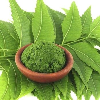 azadirachta indica leaf herbal powder