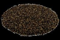 Tora Seeds, Cassia Tora Seed