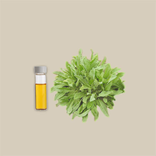 costmary oil
