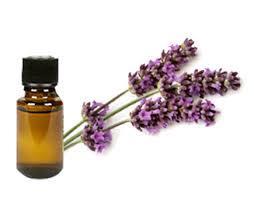 lavendine oil