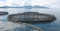 Fishnet Frame