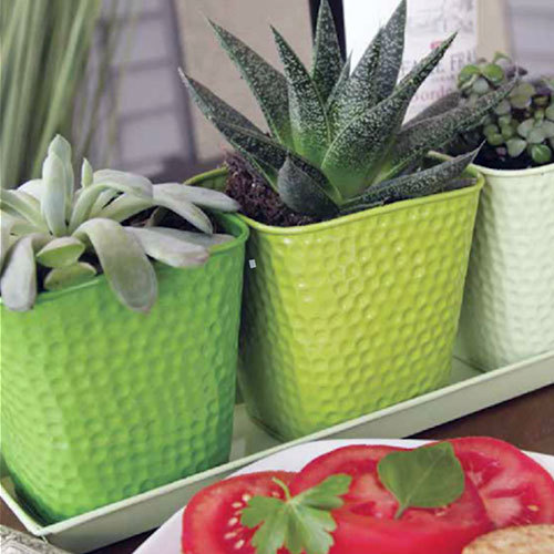 Designer Planter Set