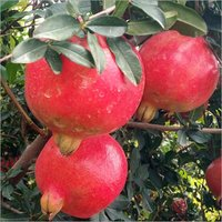Natural Organic Pomegranate