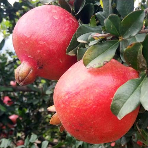Natural Organic Pomegranate