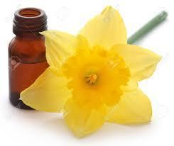 Daffodil oil