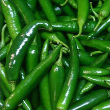 Indian Green Chilli