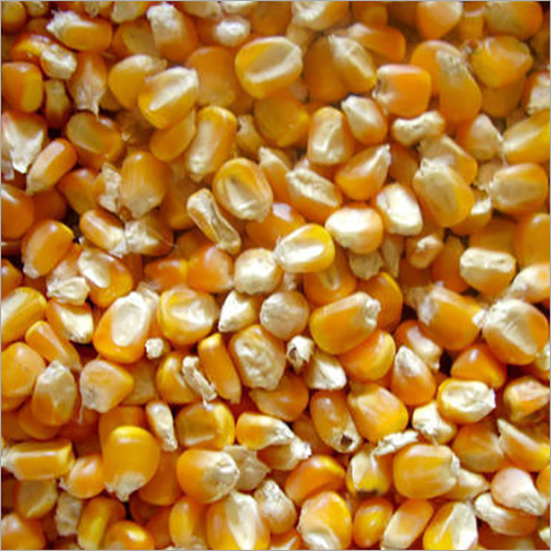 Raw Maize Seeds