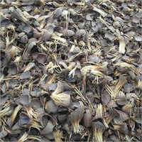 Palm Kernel Shell Palm Nut Shell