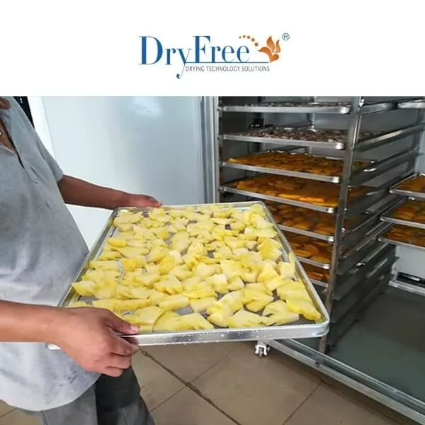 Fruits Dry And Dehumidify Machine
