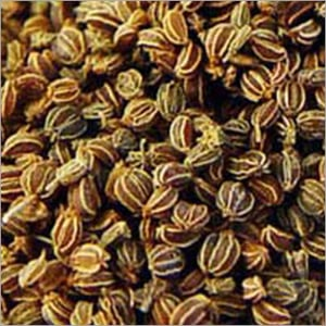 Celery Seed Select Oil