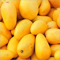 Mango Ginger Select Oil