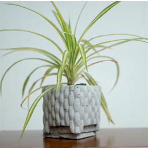 CCPL 1002-Square Shape Small Planter