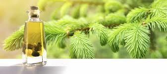 Spruce Oil