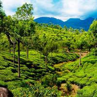 5 Nights in Kerala Packages
