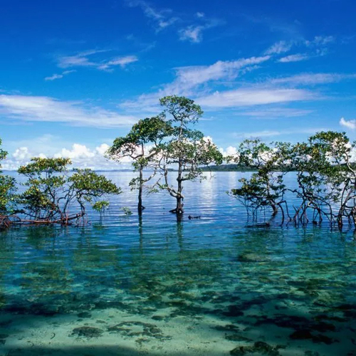 5 Nights in Andaman Packages