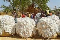 West African Raw Cotton
