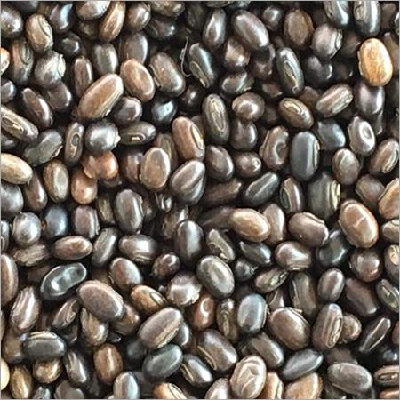 MB Seed