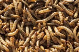 High Protein Dried Mealworms for Animal Food Pet Food
