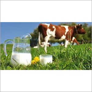 Fresh Cow Milk
