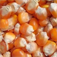 Organic Yellow Corn