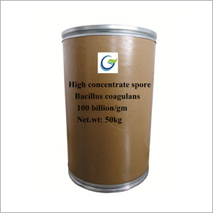 High Concentrate Spore Bacillus Coagulans Powder