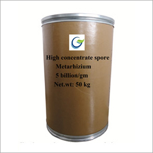 High Concentrate Spore Metarhizium Powder