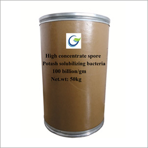 High Concentrate Spore Potash Solubilizing Bacteria Powder