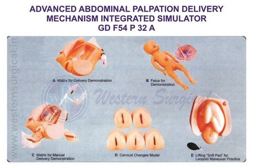 ADVANCED ABDOMINAL PALPATION DELIVERY MECHANISM INTEGRATED SIMULATOR GD F54