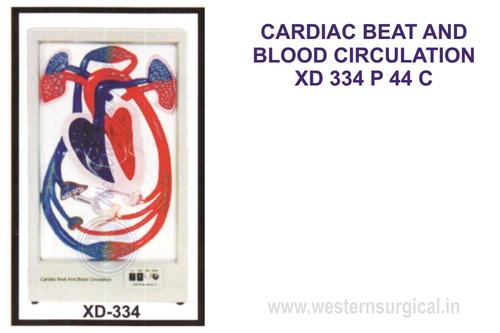 CARDIAC BEAT AND BLOOD CIRCULATION XD 334