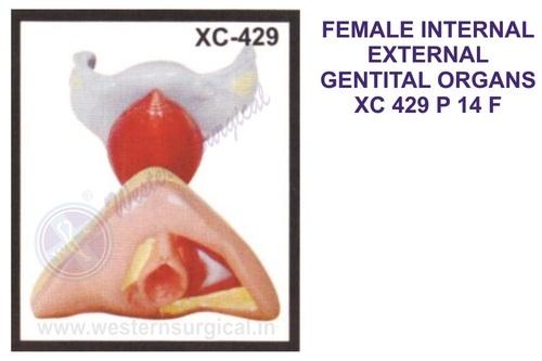 FEMALE INTERNAL EXTERNAL GENTITAL ORGANS XC 429