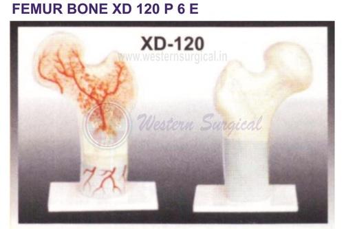 FEMUR BONE XD 120