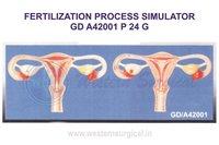 FERTILIZATION PROCESS SIMULATOR GD A42001