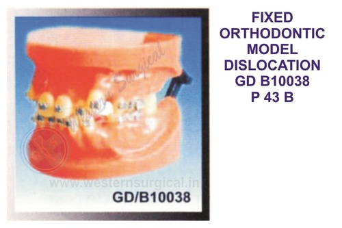 FIXED ORTHODONTIC MODEL DISLOCATION GD B10038
