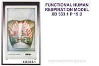 FUNCTIONAL HUMAN RESPIRATION MODEL XD 333