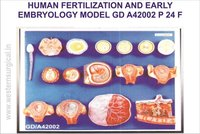 HUMAN FERTILIZATION AND EARLY EMBRYOLOGY MODEL