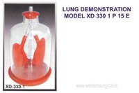 LUNG DEMONSTRATION MODEL