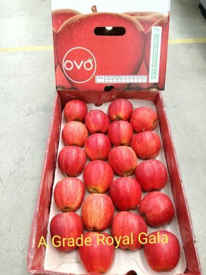 Imported Apple