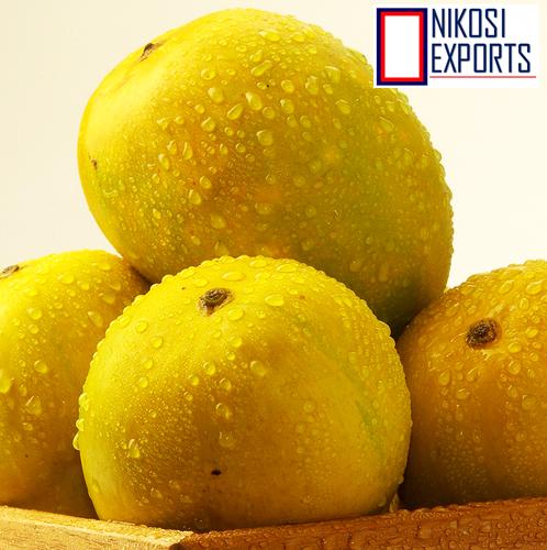 Fresh Alphonso mangoes