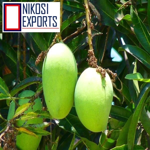 Fresh mallika mangoes