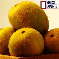 Fresh Neelum mangoes