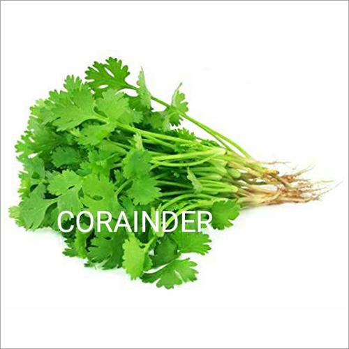 Fresh Coriander Leaf
