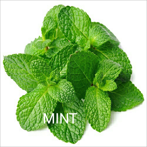 Fresh Mint Leaf