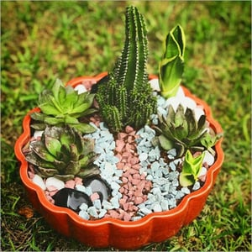 Decorative Ceramic Flower Planter