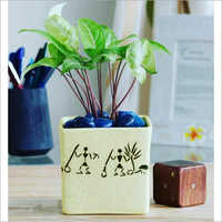 Square Ceramic Planter