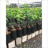 Agro Grow Bag