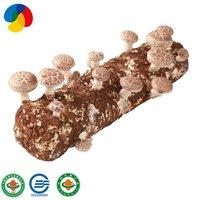 Factory Direct Sale Organic Mushroom Spawn / Logs For Mushroom Farm