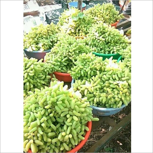 Seedless Green Grapes